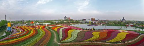 The aerial photo of tulip flowers and multicolored melody stock image