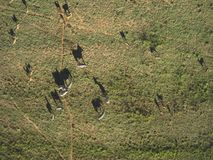Aerial photo of zebras and impalas Stock Photography