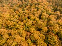 Colourful autumn trees Stock Photography