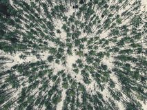 Aerial Photography of a Forest in Winter - vintage look edit. Aerial Photography of a Bright Forest in Sunny Winter Day from Top - vintage look edit royalty free stock photography