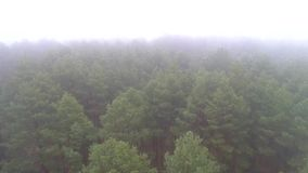Aerial photography of coniferous forest in a strong fog. The drone flies over the tree crowns through the fog. The Middle Strip of Russia stock footage