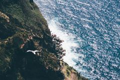 Aerial Photography Flying Bird Above Sea during Daytime Royalty Free Stock Images