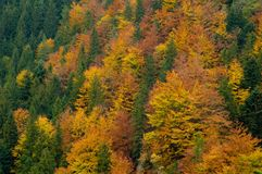 Aerial Photography of Forest stock photo