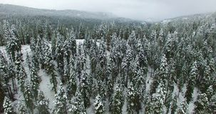 Aerial Photography of Forest during Winter Stock Photography