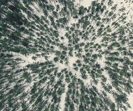 Aerial Photography of a Forest in Winter - vintage look edit. Aerial Photography of a Bright Forest in Sunny Winter Day from Top - vintage look edit Stock Photography