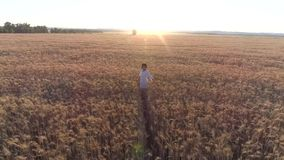 Aerial photography Girl running cross the wheat field at sunset. Slow motion, high speed camera. Aerial photography Girl running cross the wheat field at sunset stock video