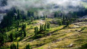 Aerial Photography of Green Forest Royalty Free Stock Image