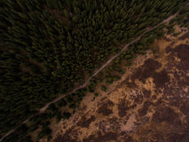 Aerial Photography of a Green Forest Stock Images