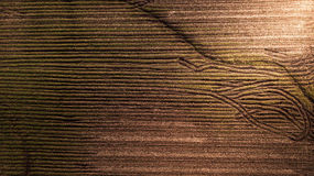 Aerial photography Pattern on the Earth Field Abstract Harvest Season. Aerial photography Pattern on the Earth Field  Harvest Season Stock Images