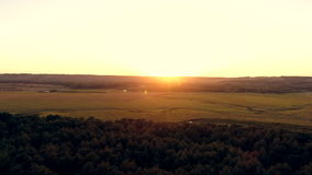 Aerial photography of a pine forest at sunset. Flight over the trees in the coniferous forest towards the sun stock video footage