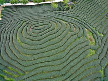 Aerial photography on top of the mountain tea garden landscape. Aerial photography at Spring mountain tea garden landscape stock images