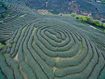 Aerial photography on top of the mountain tea garden landscape. Aerial photography at Spring mountain tea garden landscape royalty free stock image