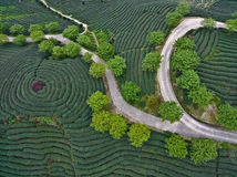 Aerial photography on top of the mountain tea garden landscape. Aerial photography at Spring mountain tea garden landscape with winding road Royalty Free Stock Photography