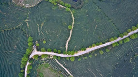 Aerial photography on top of the mountain tea garden landscape Stock Image