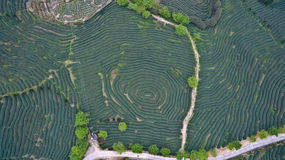 Aerial photography on top of the mountain tea garden landscape Stock Images