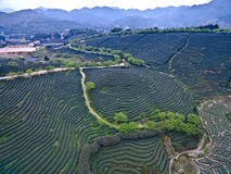 Aerial photography on top of the mountain tea garden landscape Royalty Free Stock Image