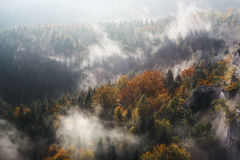 Aerial Photography of Trees Royalty Free Stock Photos
