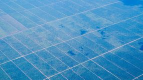 Aerial picture of palm oil plantation in Borneo, Indonesia. stock photography