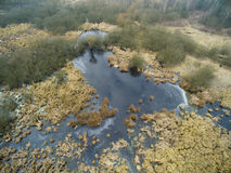 Aerial picture of swamp in winter Stock Photography