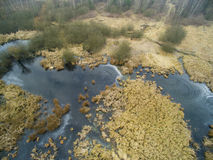 Aerial picture of swamp in winter Royalty Free Stock Photos