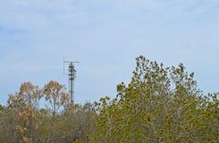 Aerial Radar Mast Amongst Trees Royalty Free Stock Image