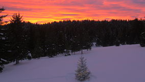 Aerial, raw footage - Christmas tree in forest and colorful sunset clouds stock video footage