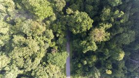 Aerial road in tropical rainforest Royalty Free Stock Images