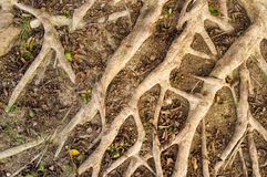 Aerial roots background Stock Photos