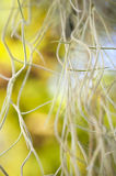 Aerial Roots Stock Images