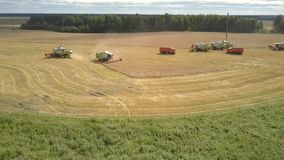 Aerial round motion modern harvesters gather ripe wheat. Tyumen/russia - August 31 2018: Wonderful aerial round motion modern harvesters gather ripe wheat on stock footage