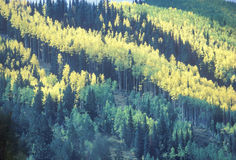 Aerial of San Juan National Forest, CO Stock Photography