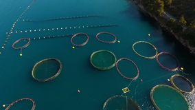 Aerial shoot of farm for growing shells, mussels and oysters. Aerial shoot of plantation for growing shells, mussels and oysters stock video
