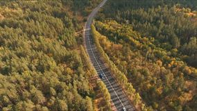 Aerial shoot of trail in colorful autumn forest stock video