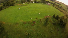 Aerial shooting. Flying over the field, the trees near the village.  stock video