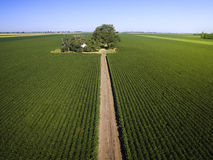 Aerial shot of agricultural soy fields. Early morning flying above agricultural soy fields Stock Image