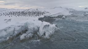 Aerial shot Antarctica penguins colony.