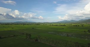 Aerial Shot Asia Rice Field Beautiful rainy sky and green rice fields stock video