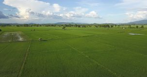 Aerial shot Asia rice field beautiful rainy sky and green rice fields stock footage