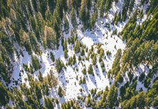 Aerial shot of a beautiful snowy forest with green tall trees in the winter stock photography