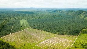 Aerial shot in borneo of palm oil, rubber and jungle royalty free stock images