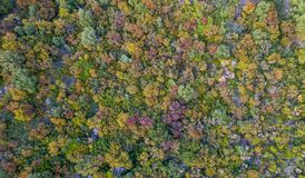 Aerial shot of colorful trees at autumn.  Royalty Free Stock Photo