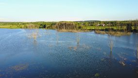 Dead Trees Flooded in Water. Aerial shot of the dead tree by the lake with the beautiful blue sky stock footage