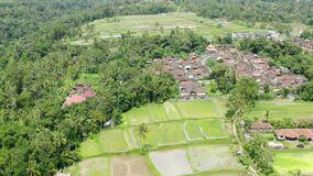 Aerial shot from drone of amazing Bali rice wet paddies with green rice, palm trees jungle rainforest landscape, houses, central