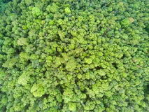 Aerial shot with a drone of a tropical rain forest Stock Image