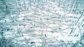 Aerial shot of fallen broken trees in the forest in winter. Aerial shot of fallen trees in the forest stock footage