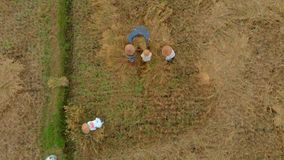 Aerial shot of farmers farmers threshing rice in a traditional way. Travel to Asia concept stock video footage