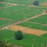 Aerial shot of farmland Royalty Free Stock Photo