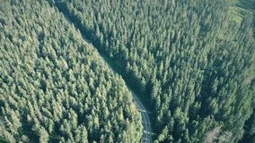 Forest and European rural car road. Aerial shot of a fir tree forest and European rural car road stock video