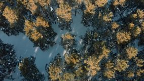 Aerial shot. Flight ower snowy winter forest. Low flight over the forest in winter in the mountains. stock footage