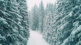 Aerial shot of a forest in heavy snow. Aerial shot of a forest in the snow stock video